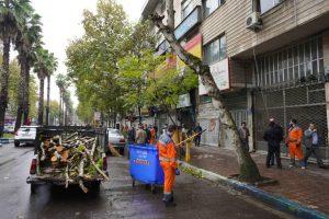 """طرح ضربتی """" هرس و ایمن سازی درختان خطر آفرین سطح شهر"""" اجرا شد"""