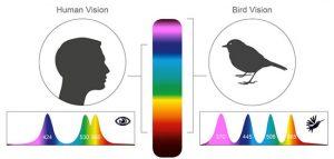 پرندهها دنیا را چگونه میبینند؟ + عکس