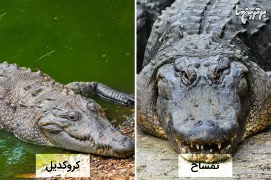 تفاوت این حیوانات شبیه به هم را میدانید؟